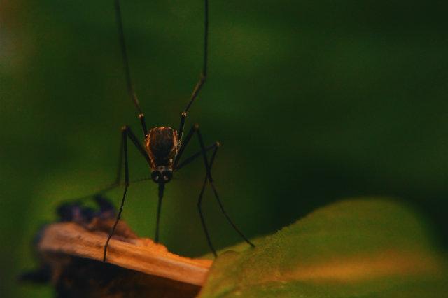 prevenire punture zanzare valeria colonna dermatologa bari